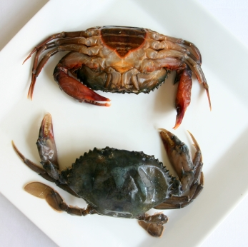 In Season:  Soft Shell Crabs