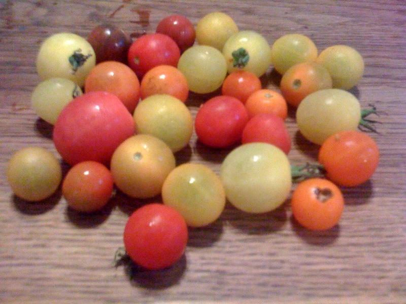 The Best Cherry Tomato I Ever Tasted